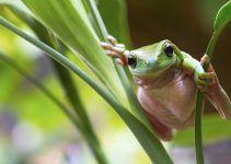 O que significa sonhar com sapo verde?