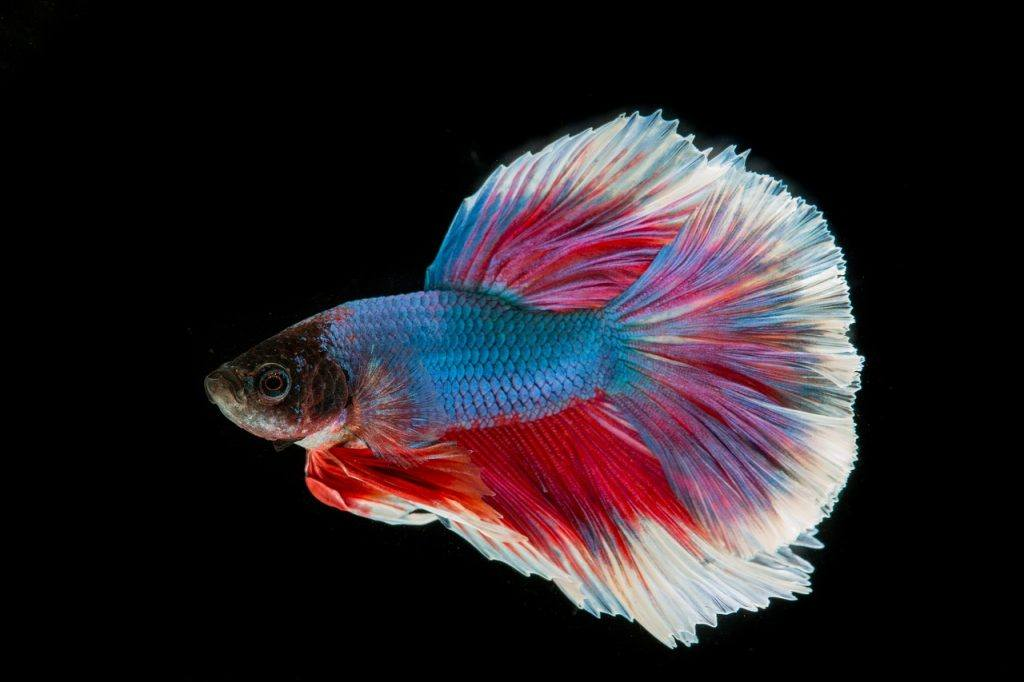 O que significa sonhar com peixe colorido?