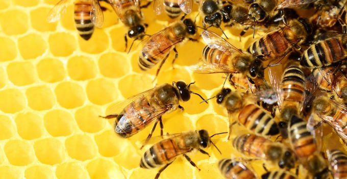 O que significa sonhar com enxame de abelhas?
