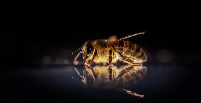 O que significa sonhar com abelha picando?