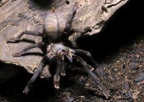 O que significa sonhar com aranha grande?