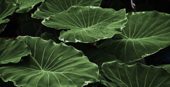 O que significa sonhar com plantas?