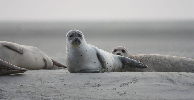 O que significa sonhar com foca?