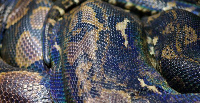 O que significa sonhar com ninho de cobras?