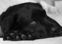 O que significa sonhar com cachorro doente?