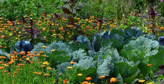 O que significa sonhar com horta?